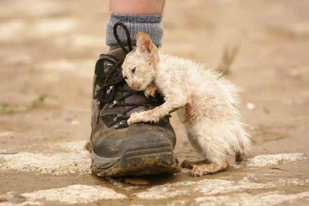 уродливый, кот, поливать, отсутствовать, нога, угол, реакция, шланг, дом, бросать